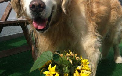 Einer für alle … Hund oder nicht; er liebt sie alle!