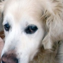Ich schwerhöriger Hund höre nur montags zwischen fünf und fünf Uhr fünf.