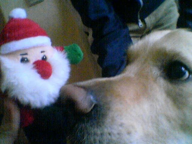 Advent Advent, der Hund gleich brennt …